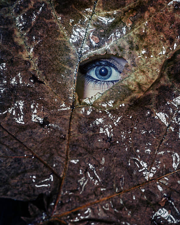 Female Poster featuring the photograph The Eye by Joana Kruse