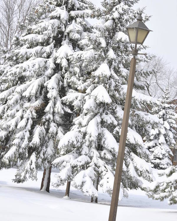 Snow Poster featuring the photograph The Lamp And The Tree by Frederico Borges