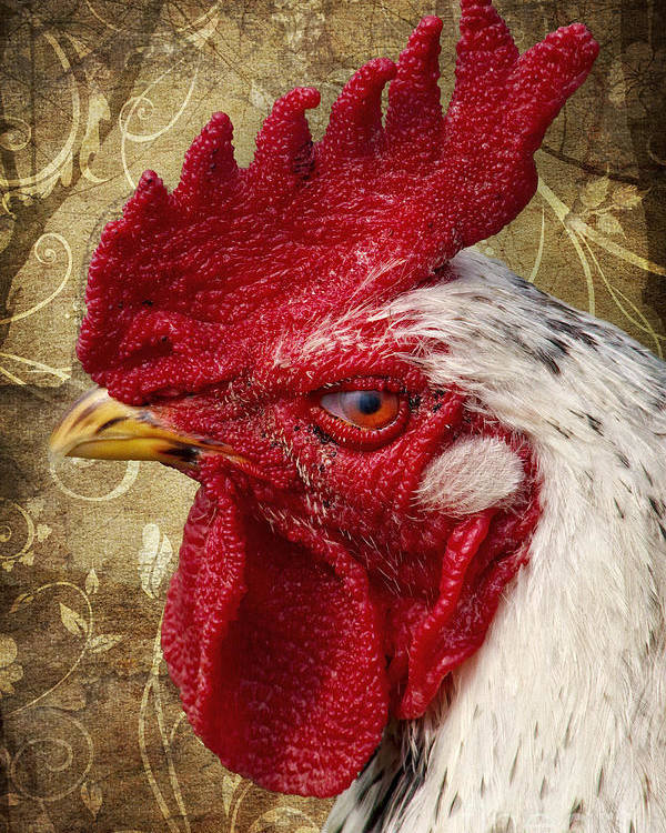 Rooster Poster featuring the photograph The Rooster by Angela Doelling AD DESIGN Photo and PhotoArt
