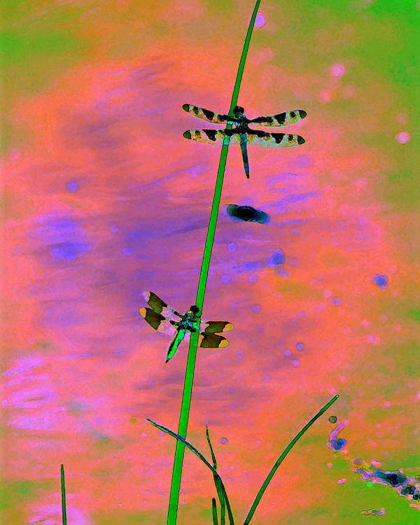 Dragonflies Poster featuring the photograph The Skimmer And The Whitetail Art #1 by Ben Upham III