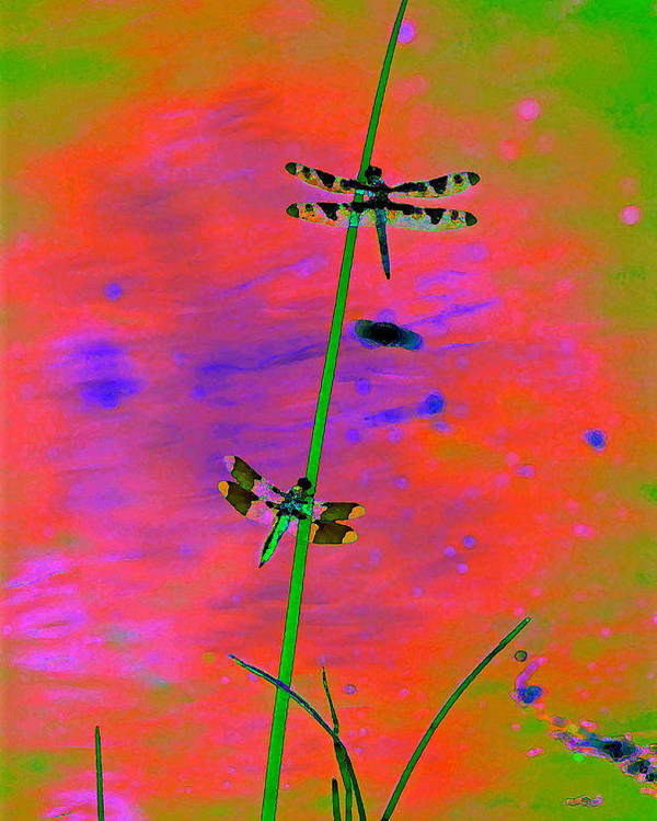 Dragonflies Poster featuring the photograph The Skimmer And The Whitetail Art #2 by Ben Upham III