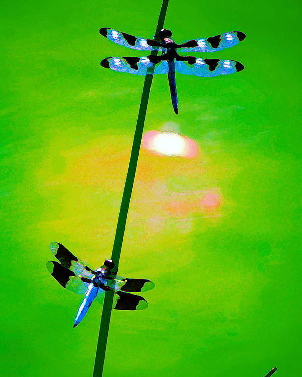 Dragonflies Poster featuring the photograph The Skimmer And The Whitetail Art #3 by Ben Upham III