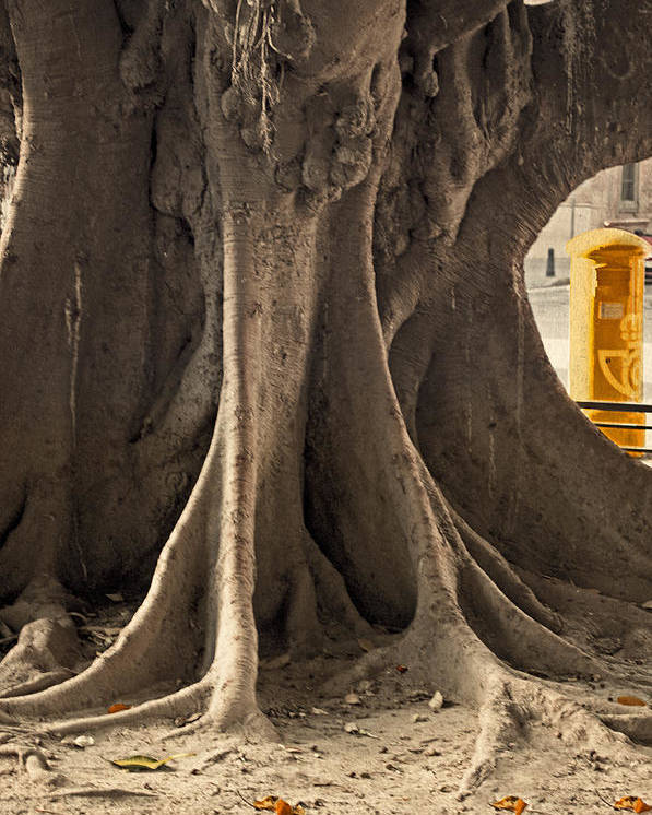 Tree Poster featuring the photograph The Tree And The Post Box by Mary Machare