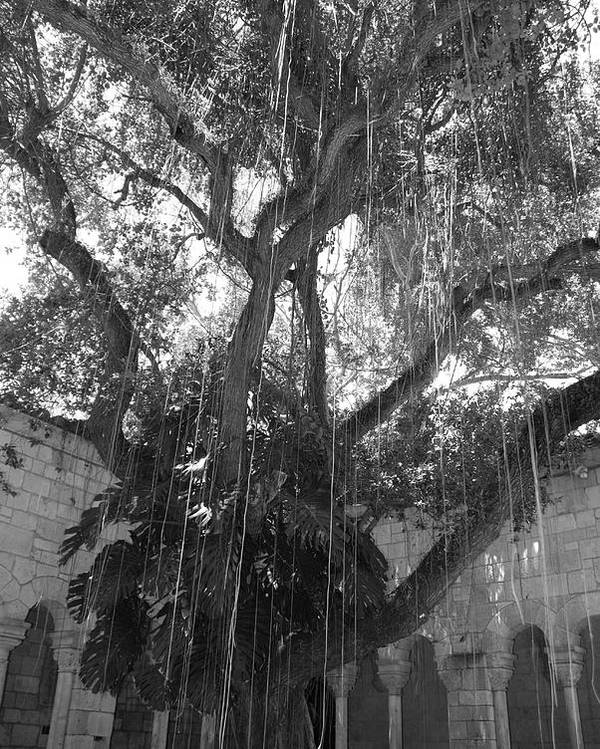 Black And White Poster featuring the photograph The Tree Vines by Rob Hans