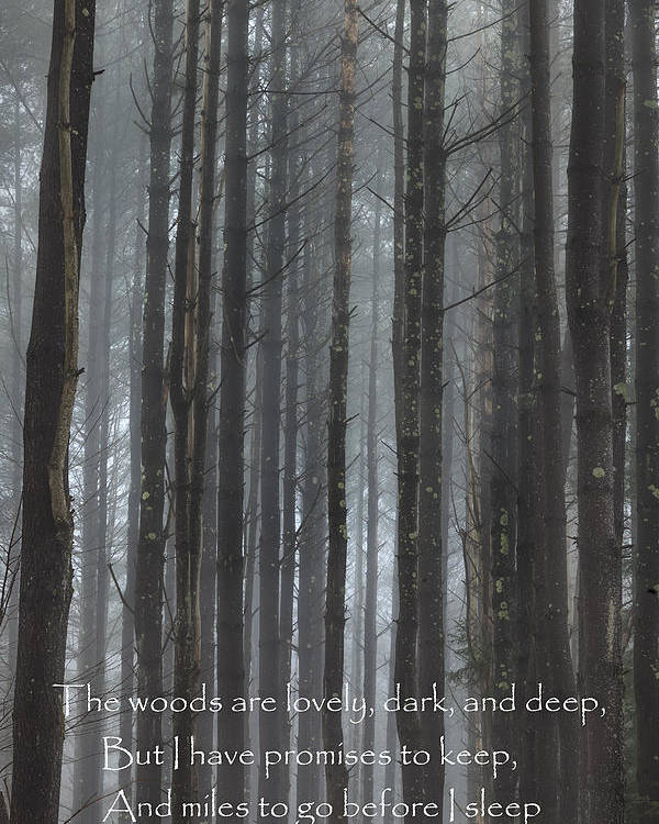 The Woods Poster featuring the photograph The Woods by Bill Wakeley