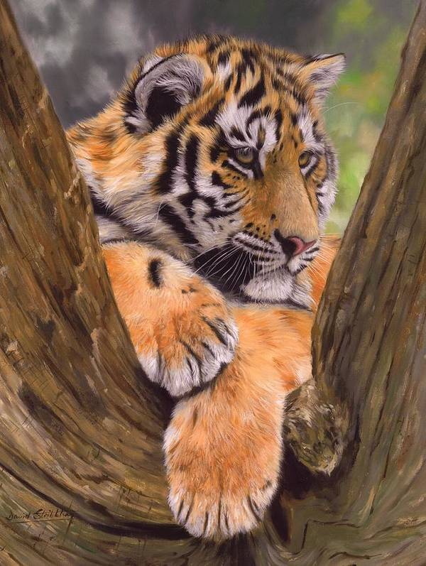 Tiger Poster featuring the painting Tiger Cub Painting by David Stribbling