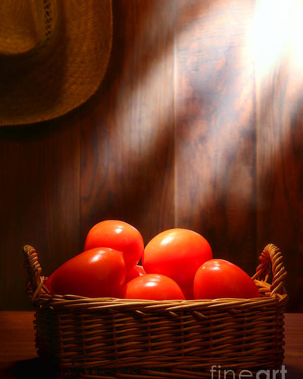 Tomatoes Poster featuring the photograph Tomatoes At An Old Farm Stand by Olivier Le Queinec