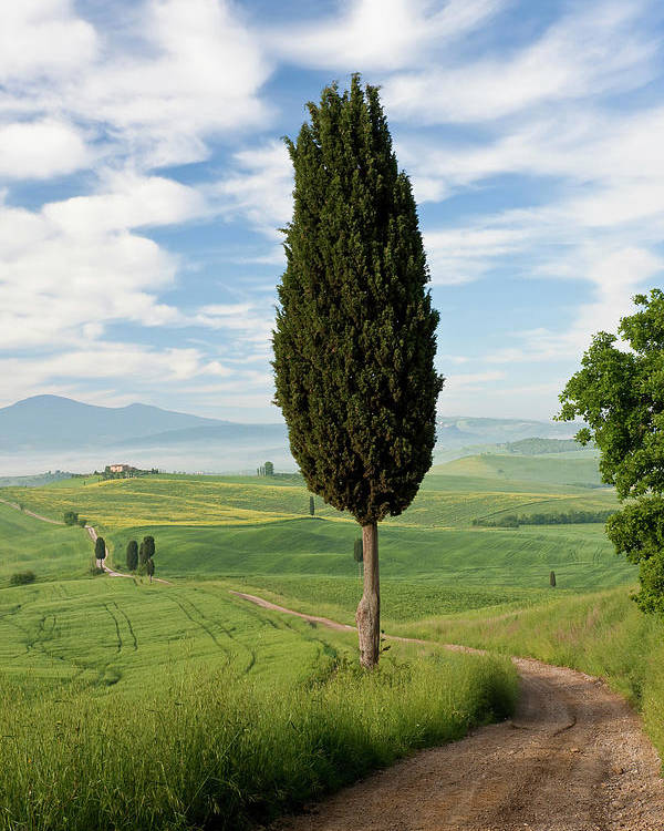 Agriculture Poster featuring the photograph Track, San Quirico D'orcia, Val by Peter Adams