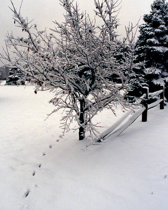 Snow Poster featuring the photograph Tracks by Skip Willits