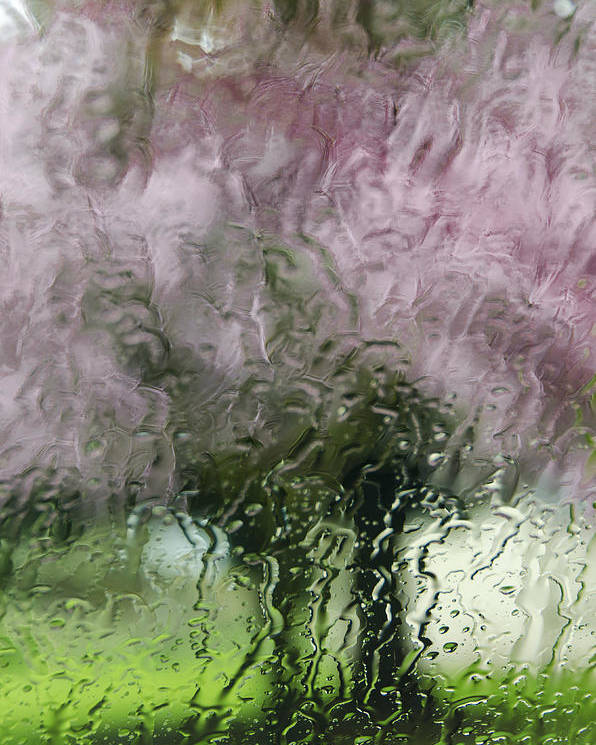 Tree Blossoms Poster featuring the photograph Tree Blossoms In The Rain by Irene Theriau