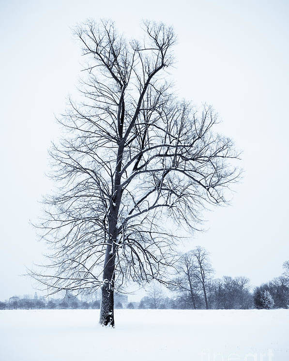 B&w Poster featuring the photograph Tree In Snow by Lana Enderle