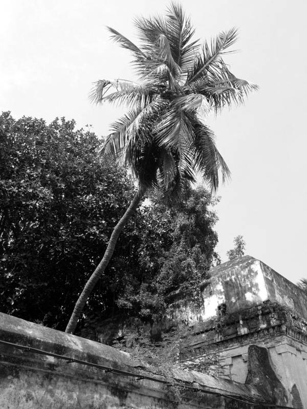 Tree Poster featuring the photograph Tree In The Temple by Vikas Tripathi