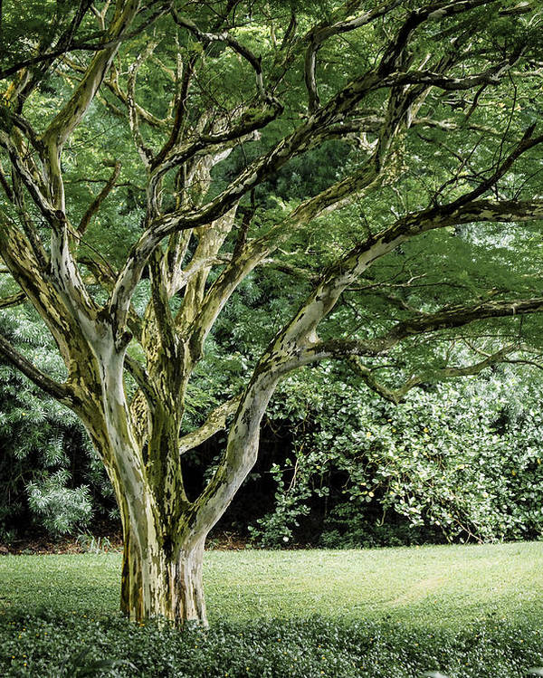 Tree Poster featuring the photograph Tree Of Life by Debbie Karnes