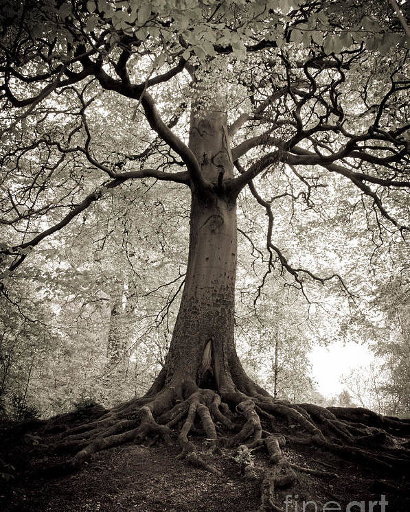Tree Poster featuring the photograph Tree Of Life by Dominique De Leeuw