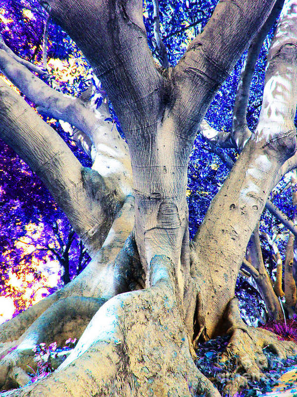 Multicolors Tree Poster featuring the photograph Tree Of Life Photography On Canvas Poster Beautiful Unique Fine Art Prints For Your Home Decoration by Marie Christine Belkadi
