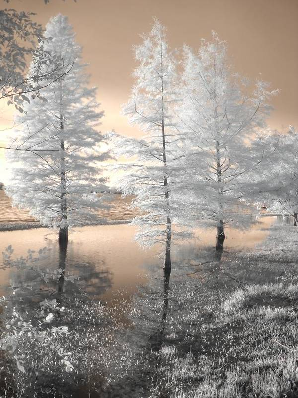 Tree Poster featuring the photograph Tree Reflections by Jane Linders
