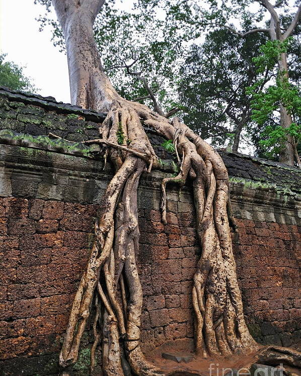 Tree Poster featuring the photograph Tree Roots On Ruins At Angkor Wat by Sami Sarkis