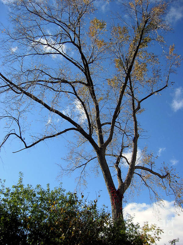 Landscape Poster featuring the photograph Tree Under Blue Sky by Andre Paquin