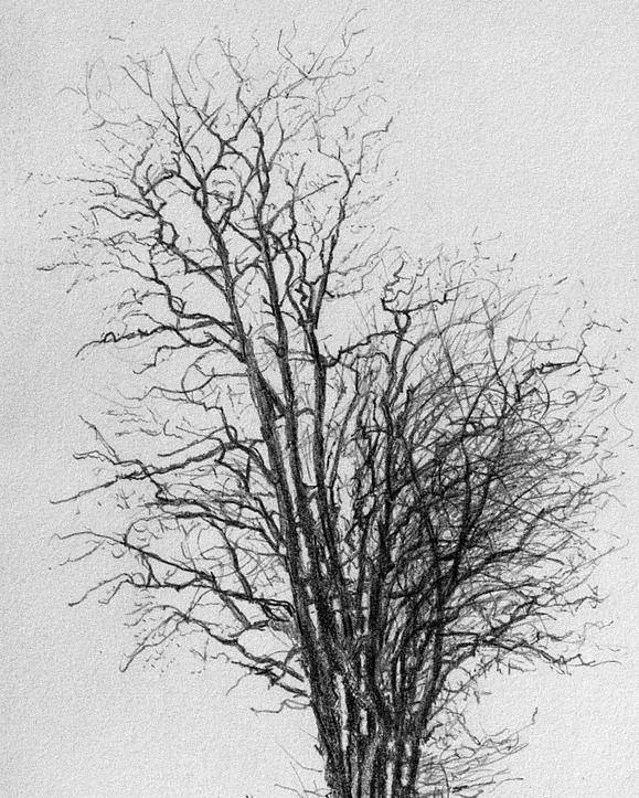 Trees Poster featuring the drawing Tree With Figures by Robert Tracy
