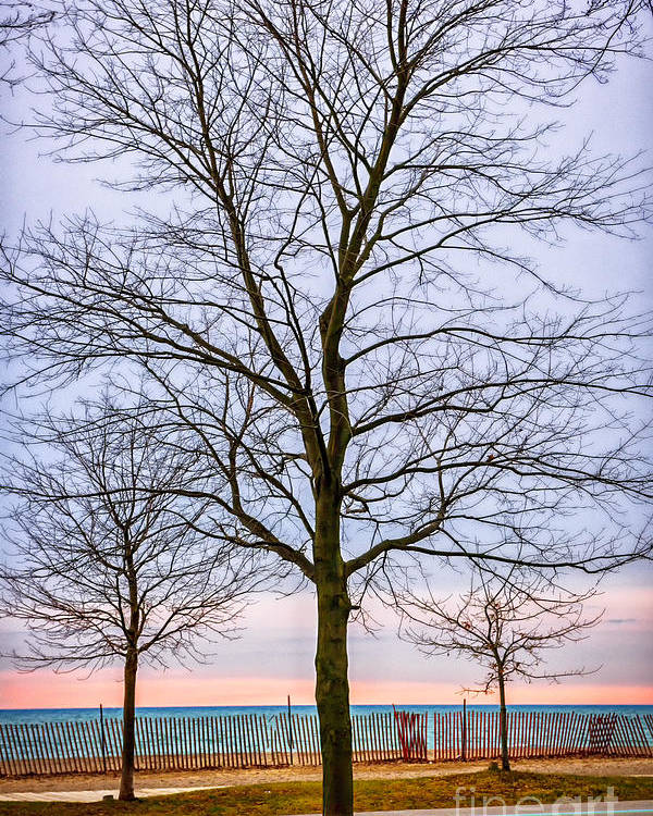 Tree Poster featuring the photograph Trees At The Boardwalk In Toronto by Elena Elisseeva