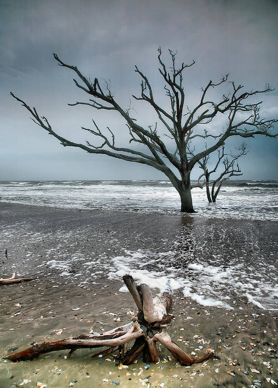 Ocean Poster featuring the photograph Trees In Surf by Steven Ainsworth