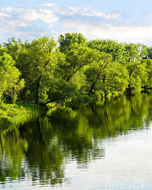 Trees Poster featuring the photograph Trees Reflecting In River by Elena Elisseeva
