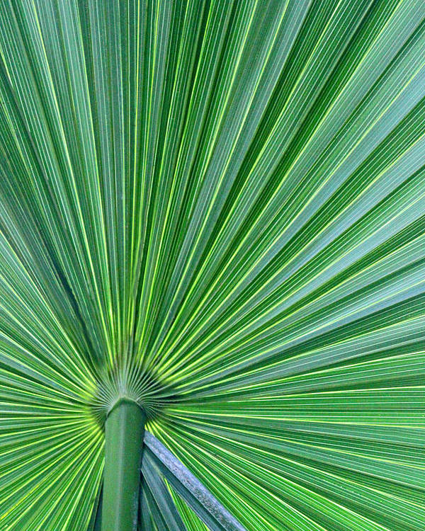 Greenery Poster featuring the photograph Tropical Leaf by Carolyn Stagger Cokley