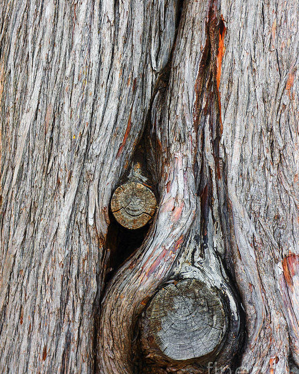 Abstract Poster featuring the photograph Trunk Knot by Carlos Caetano