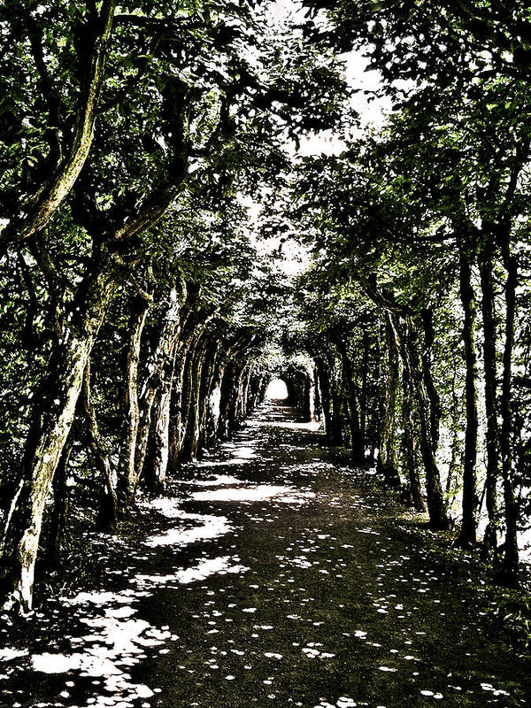 Europe Poster featuring the photograph Tunnel Of Trees ... by Juergen Weiss