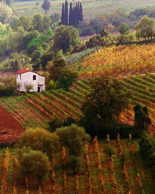 Montepulciano Poster featuring the photograph Tuscan Autumn by John Galbo