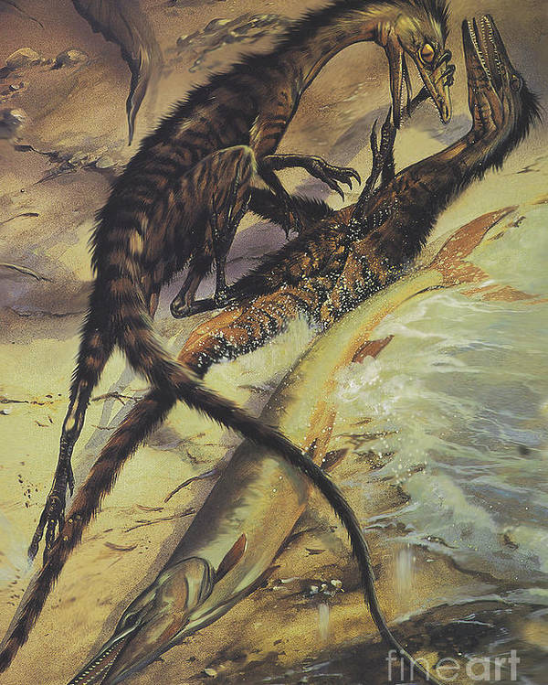 two compsognathus dinosaurs fighting poster by jan sovak