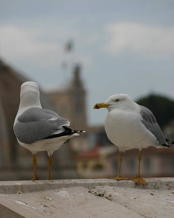 Seagull Poster featuring the photograph Two Gulls by Anika Kanter