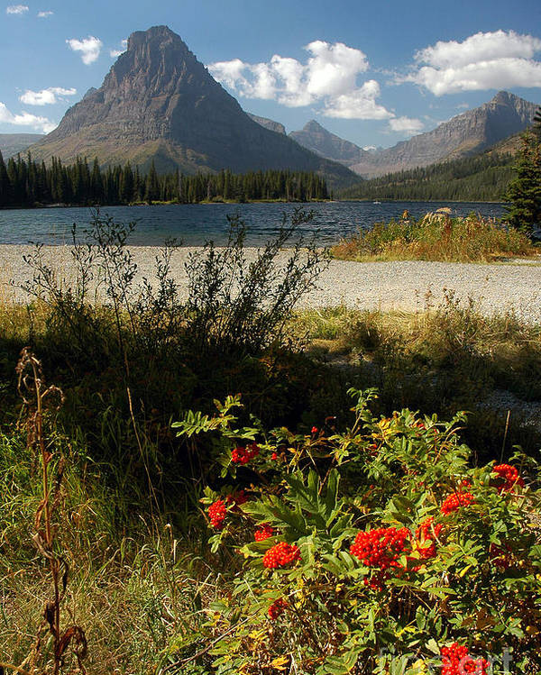 Two Medicine Poster featuring the photograph Two Medicine Lake In Glacier by Cindy Murphy - NightVisions