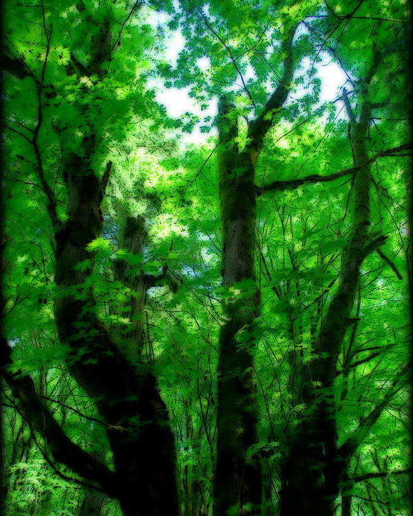 Trail Poster featuring the photograph Up Through The Trees by Kathy Sampson