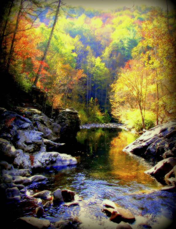 Smokey Mountains Poster featuring the photograph Upstream by Karen Wiles