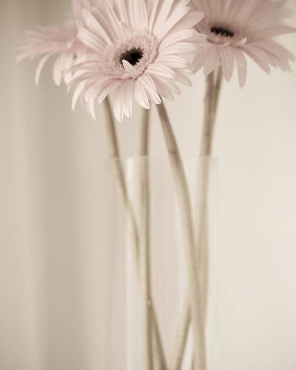 Julie Palencia Poster featuring the photograph Vintage Daisies by Julie Palencia