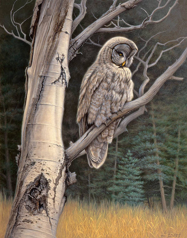 Wildlife Poster featuring the painting Visitor From The North-great Grey Owl by Paul Krapf