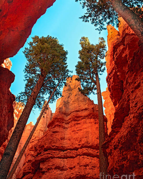 Trees Poster featuring the photograph Wall Street by Robert Bales