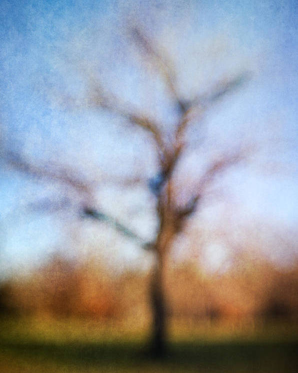 Blur Poster featuring the photograph Warner Park Tree by David Morel