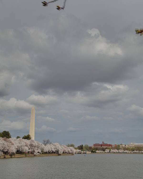 America Poster featuring the photograph Washington Monument - Cherry Blossoms - Washington Dc - 011333 by DC Photographer