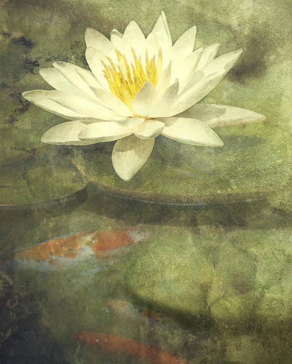 Water Lily Poster featuring the photograph Water Lily by Scott Norris
