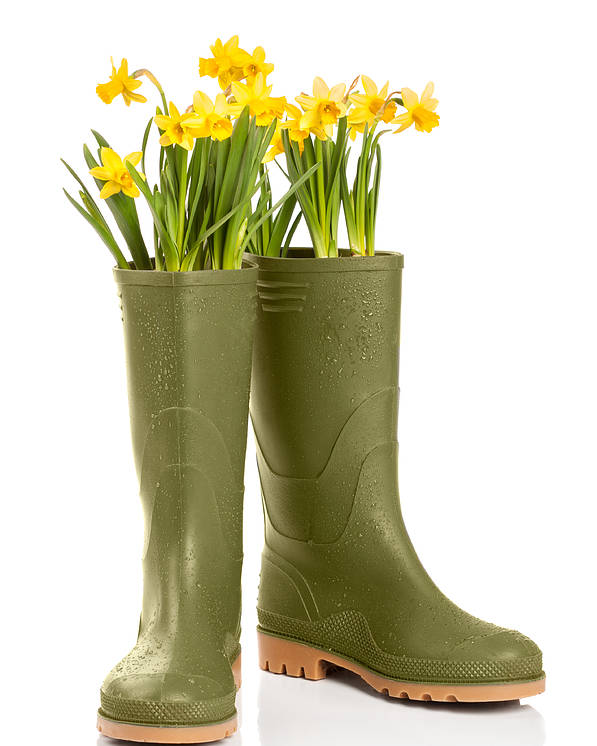 Spring Poster featuring the photograph Wellington Boots by Amanda Elwell