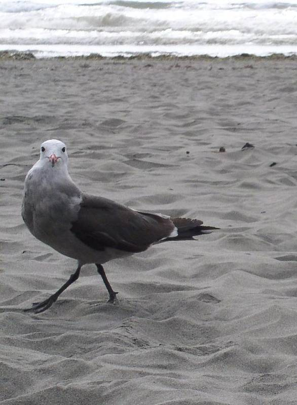 Seagull Poster featuring the photograph What are you looking at by Valerie Josi