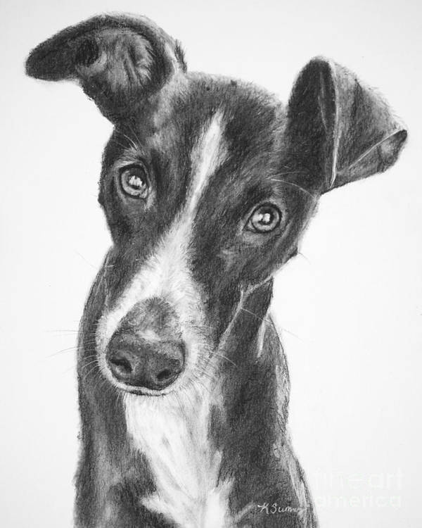 Whippet Poster featuring the drawing Whippet Black And White by Kate Sumners