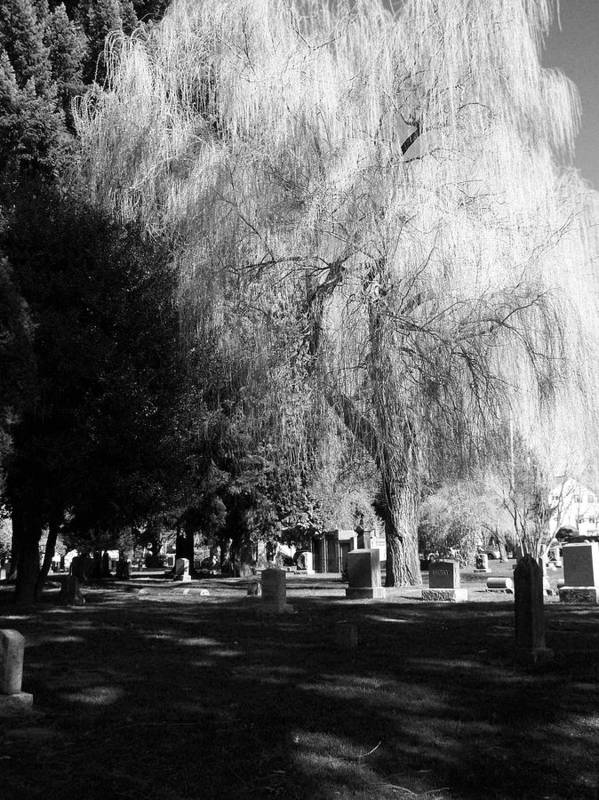 Cemetary Poster featuring the photograph Whispering In The Wind... by Heather L Wright