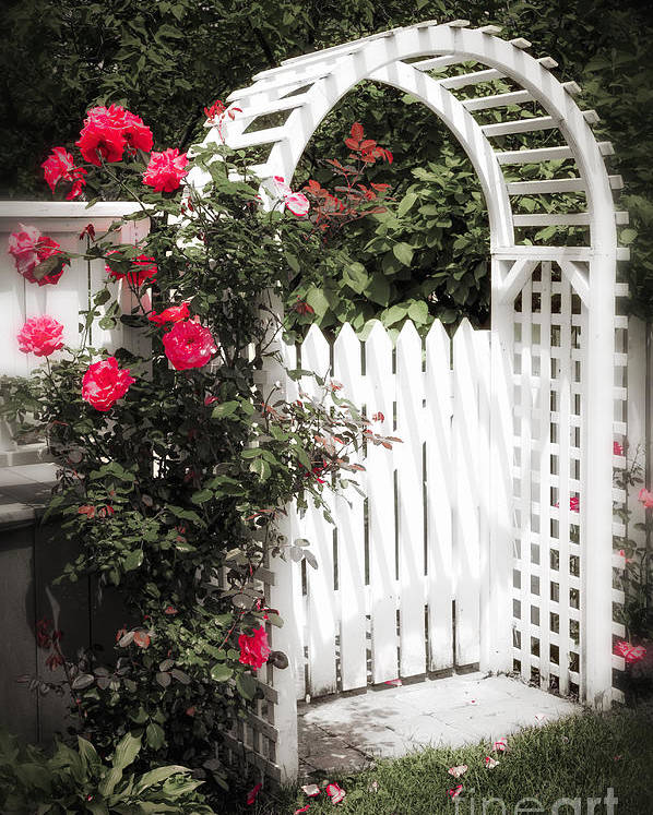 Trellis Poster featuring the photograph White Arbor With Red Roses by Elena Elisseeva