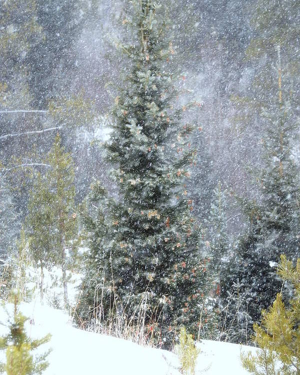 Winter Poster featuring the photograph White Fall by Michelle Pierce
