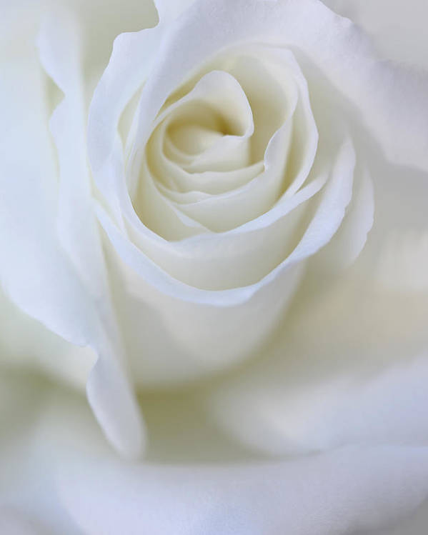 Rose Poster featuring the photograph White Rose Floral Whispers by Jennie Marie Schell