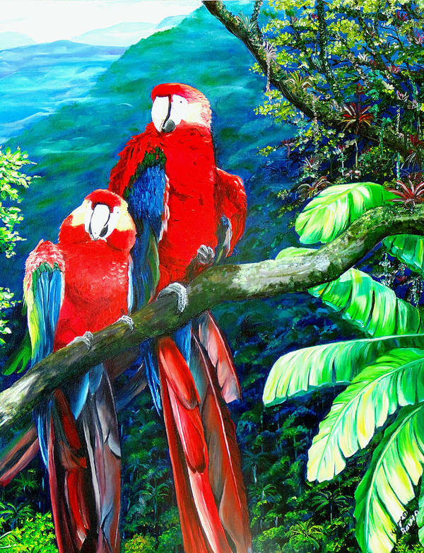 Caribbean Painting Green Wing Macaws Red Mountains Birds Trinidad And Tobago Birds Parrots Macaw Paintings Greeting Card  Poster featuring the painting Who Me  by Karin Dawn Kelshall- Best