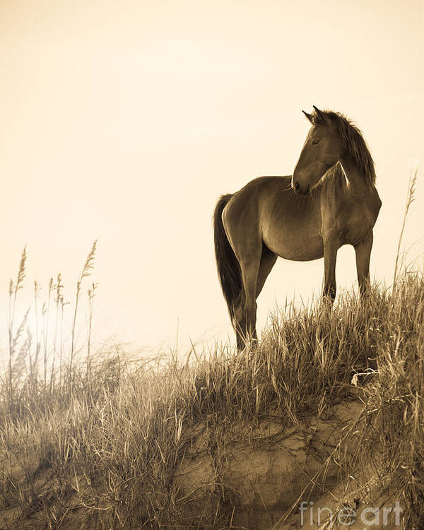 Horse Poster featuring the photograph Wild Horse On The Beach by Diane Diederich